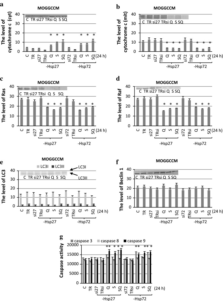 The level of cytochrome c ( a cytoplasmic, b mitochondrial fraction), Ras ( c ), Raf ( d ), LC3 ( e ) and beclin 1 ( f ) expression with representative blots and the activity of caspase 3, 8, 9 ( f ) after sorafenib (S) and quercetin (Q) treatment for 24 h in MOGGCCM cells transfected with specific siRNA anti-Hsp27 (si27) and anti-Hsp72 (si72). The data were normalised relative to β-actin (not shown). C control cells, SQ simultaneous drug treatment, si27 or si72 specific siRNA blocking Hsp27 or Hsp72 expression, TR transfection reagent, TRsi transfection reagent with specific siRNA * P