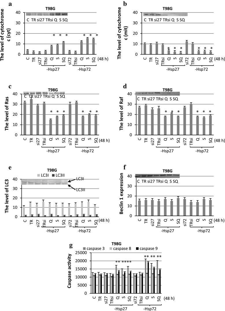 The level of cytochrome c ( a cytoplasmic, b mitochondrial fraction), Ras ( c ), Raf ( d ), LC3 ( e ) and beclin 1 ( f ) expression with representative blots and the activity of caspase 3, 8, 9 ( g ) after sorafenib (S) and quercetin (Q) treatment for 48 h in T98G cells transfected with specific siRNA anti-Hsp27 (si27) and anti-Hsp72 (si72). The data were normalised relative to β-actin (not shown). C control cells, SQ simultaneous drug treatment, si27 or si72 specific siRNA blocking Hsp27 or Hsp72 expression, TR transfection reagent, TRsi transfection reagent with specific siRNA, * P