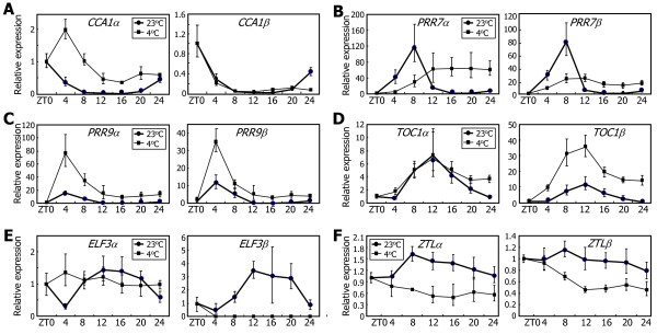 Effects of low temperatures on the alternative splicing of the clock genes. Ten-day-old Col-0 plants grown on MS-agar plates under LDs were transferred to 4°C under continuous light conditions. Whole plant materials were harvested at the indicated ZT points. The levels of the RNA splice variants of CCA1 (A) , PRR7 (B) , PRR9 (C) , TOC1 (D) , ELF3 (E) , and ZTL (F) genes were determined by qRT-PCR. Biological triplicates were averaged. Bars indicate the standard error of the mean.