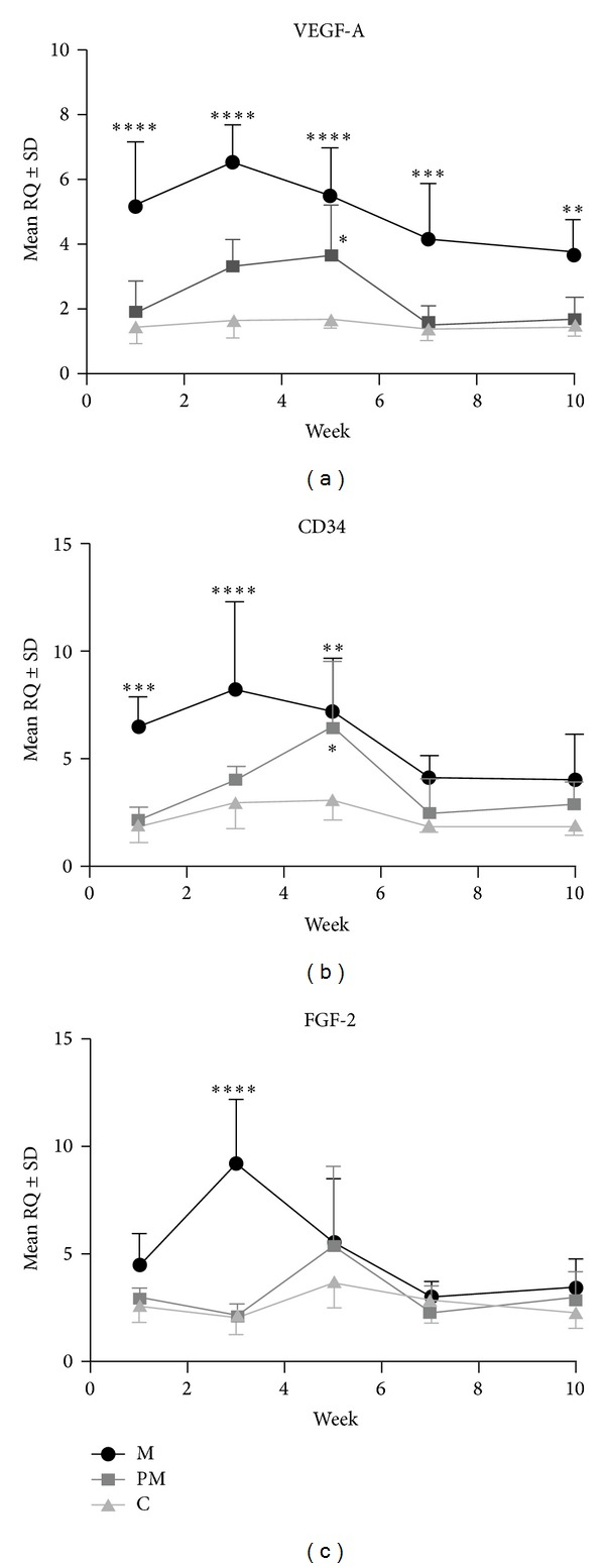 Differentiated mRNA expression of VEGF-A (a), CD34 (b), and FGF-2 (c) in the massage (M), premassage (PM), and control (C) groups. Significant differences were noted between the M and C and between the PM and C groups. * P
