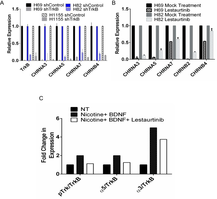 TrkB, a downstream target of NeuroD1, regulates expression of several nAChR subunits in H69 and H82 SCLC and H1155 NSCLC-NE lines. (A) H69, H82, and H1155 cells were stably infected with shTrkB or shControl vectors. Cells were selected by sorting as in Figure 5 . qRT-PCR analysis of TrkB and CHRNA3, A5, A7, and B4, plotted as expression relative to the 18s RNA control. (B) H69 and H82 cells were treated with 10 μM lestaurtinib for 8 h, followed by qRT-PCR analysis of TrkB and CHRNA3, A5, A7, B4, and B2 plotted as described. (C) H82 cells were starved for 8 h in 0.1% FBS. Cells were treated with 1 μM nicotine and 50 ng/ml BDNF for 1 h with or without lestaurtinib. Left, cell lysates immunoblotted with indicated antibodies. Right, blots quantified using LI-COR infrared imaging.