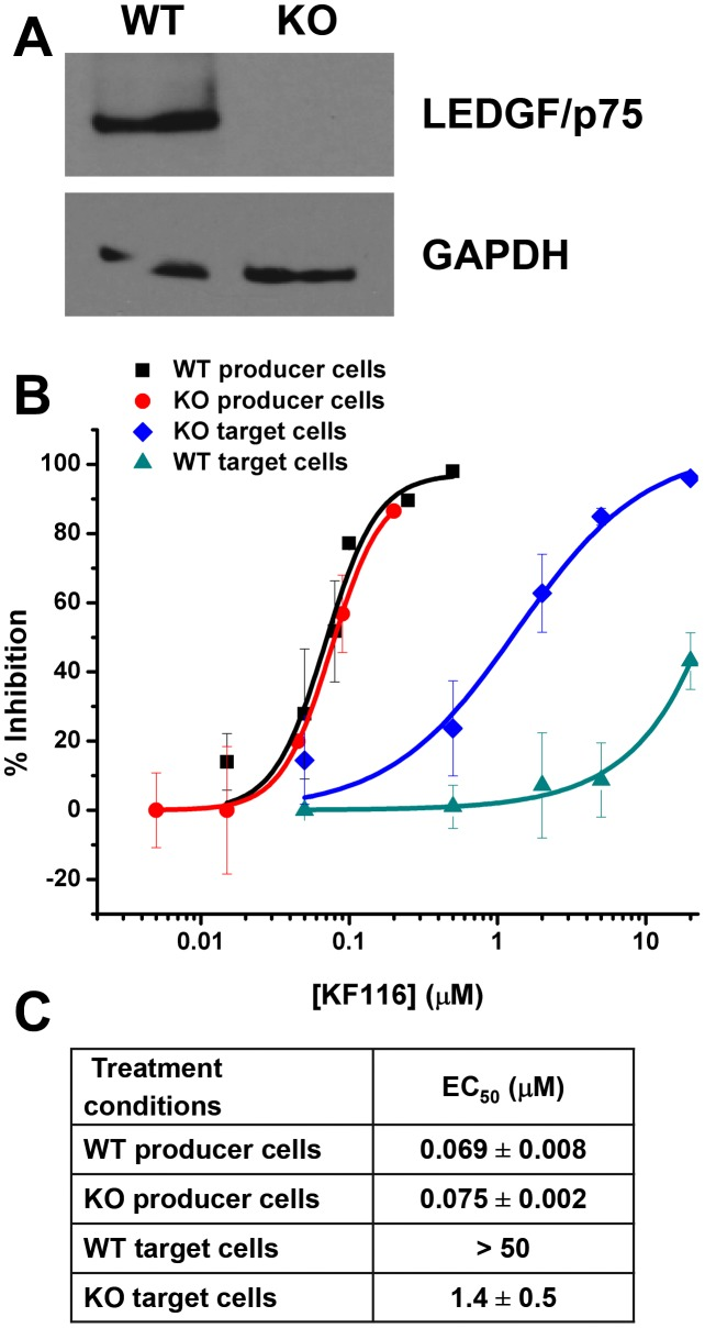 """LEDGF/p75 expression does not affect KF116 potency during late stage of HIV-1 replication. ( A ) Equivalent whole cell lysates from the clonal TALEN-derived PSIP 1 KO cell line (indicated as """"KO"""") and parental wild type HEK293T cell line (indicated as """"WT"""") were subjected to SDS-PAGE and immunoblotted for LEDGF/p75 and a GAPDH control to verify knockdown of LEDGF/p75 protein. ( B ) Dose-response curves representing the antiviral assays performed in WT or KO cell lines under the indicated conditions of drug treatment. For producer cell treatment, the VSV-G pseudotyped HIV-1-Luc progeny virions were prepared in the indicated cell line in the presence of KF116 and were then used to infect untreated HEK293T cells. For target cell treatment, KF116 was added directly to the indicated cell line and the cells were infected with untreated VSV-G pseudotyped HIV-1-Luc virions. ( C ) EC 50 values for the indicated antiviral assays. Results represent mean ± SD from three independent experiments."""