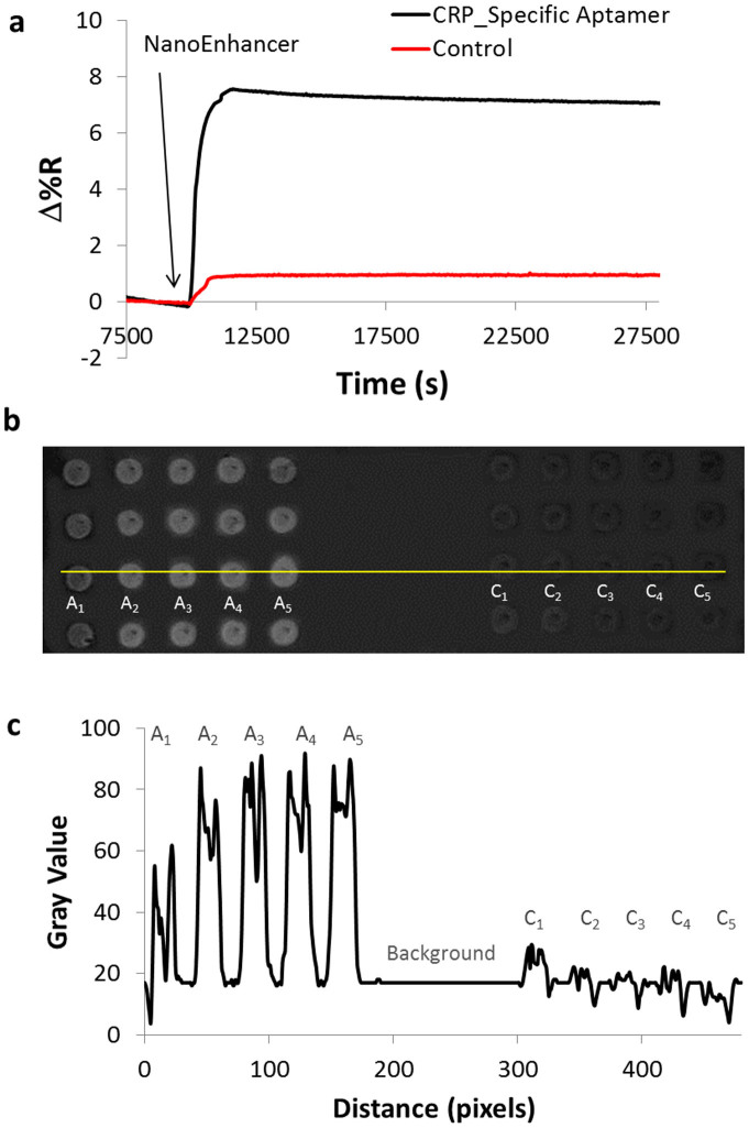 Detection of CRP using a sandwich assay spiked in human serum. (a) Binding of NanoEnhancers (CRP_specific_Aptamer-QDs) after the injection of PEG-SH and CRP (500 pg/ml) spiked in human serum to Cys/Glu/extravidin/Aptamer surface coated gold chip and (b) SPRi difference images showing the binding of NanoEnhancers to CRP (left) and control (right). (c) A plot profile of the SPRi difference image revealing intensity values to the area indicated by the yellow line in figure 4b and shows the change in contrast due to the binding of NanoEnhancers in spots functionalized with CRP_Specific aptamer (left, A1–A5), control aptamer (right, C1–C5). The middle region of the line is the background.