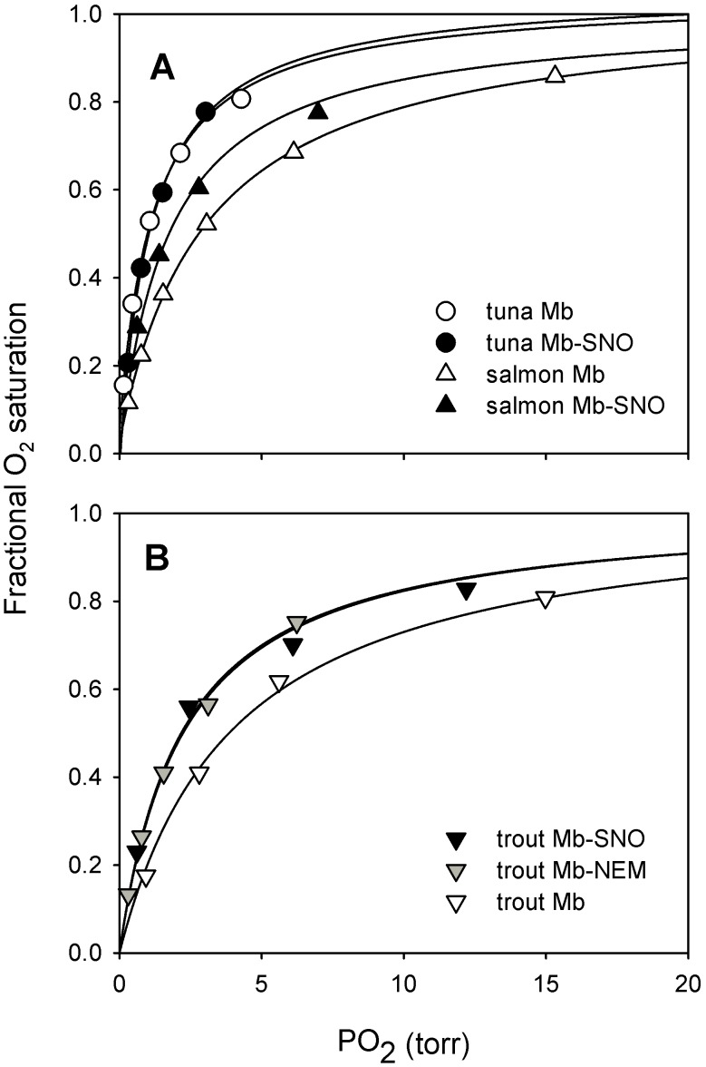 S-nitrosation increases O 2 affinity of salmon and trout Mbs but not of tuna Mb and is functionally equivalent to modification by N -ethylmaleimide. A) O 2 equilibrium curves for tuna and salmon Mb and Mb-SNO and B) O 2 equilibrium curves for trout Mb, Mb-NEM and Mb-SNO, as indicated, measured in 50 mM Tris, 0.5 mM EDTA, pH 8.3 at 20°C. Mb-SNO data are from [9] .