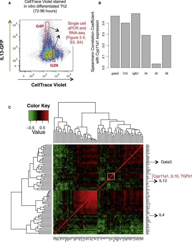 Coexpression Pattern of Th2 Suppressor <t>Cytokines</t> with Cyp11a1 at Single-Cell Level (A) Gating strategy used to purify subpopulations of Th2 cells based on their cell generation and IL-13-GFP expression. Naive Th cells obtained from spleen of IL-13-GFP reporter mice were stained with CellTrace Violet dye and polarized for Th2 (72–96 hr). The fourth-generation cells that expressed IL-13-GFP (G4P) and second-generation cells that did not express IL-13-GFP (G2N) were FACS sorted and used for single-cell gene expression analysis by qPCR and for single-cell RNA sequencing. (B) Spearman correlation coefficient (r) of Th2-associated genes with Cyp11a1 at single-cell level. Th2 cells from the G2N and G4P groups, as shown in (A) were FACS sorted as single cells. mRNA expression of different protein factors in a single cell were analyzed by single-cell qPCR. (C) Hierarchical clustering of normalized mRNA expression data in single Th2 cell by qPCR for 73 selected genes. The clustering heatmap depicts patterns of coexpression among genes, where the green and red colors indicate the strength and direction of the gene-gene correlation (red meaning higher degrees of similarity, and green lower degrees of similarity). Hierarchical clustering was applied to group genes based on the similarity of their expression profile calculated by Spearman correlation across this data set. The gene cluster containing Cyp11a1 is boxed white, which contains Cyp11a1, IL-10, and TGF-β1.