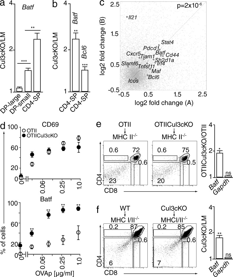 Altered Tfh gene expression in Cul3-deficient thymocytes. (a) qRT-PCR analysis of Batf in large DP, small DP, and CD4 + SP thymocytes shown as ratio of Cul3cKO/littermate (LM) control. (b) qRT-PCR analysis of Batf and Bcl6 in CD4 + SP thymocytes shown as ratio of Cul3cKO/littermate control. Bar graphs represent mean ± SEM from 5–10 pairs of KO and controls from five independent experiments. (c) Gene resolution fold changes of CD4 + SP thymocyte microarrays in Cul3cKO versus littermate controls, with biological replicates plotted as x- and y-axis coordinates. The Tfh gene set, indicated as large black scatter, is significantly up-regulated relative to other genome-wide changes in expression, as shown by comparative SSMD analysis of Monte Carlo–generated sets (P = 2 × 10 −6 ). In contrast, the Th1 and Th2 gene sets (not indicated in the figure) were not significantly altered (P = 0.3). (d) CD69-MACS–depleted OTII Tg thymocytes were stimulated with T cell–depleted CD45 congenic splenic APCs at different concentrations of OVA peptide for 20 h before FACS analysis of CD4 + SP cells for surface CD69 and intracellular Batf. Mean ± SEM of two independent experiments with three WT and three Cul3cKO is shown. (e) MHC II–deficient hosts were lethally irradiated and reconstituted with bone marrow cells from OTII Tg in a Cul3cKO or WT background as indicated. CD4/CD8 dot plots show absence of SP thymocytes at 5–6 wk after reconstitution, as expected. Bar graph shows Batf expression measured by qRT-PCR as a ratio of Cul3cKO/WT purified small DP thymocytes (mean ± SEM). Data are compiled from three WT and six KO from two independent experiments. (f) Same experiment as in panel e for MHC I/II double-deficient hosts reconstituted with Cul3cKO or WT bone marrow cells as indicated. Data are compiled from three WT and three KO from one experiment. *, P