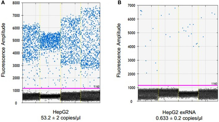 Detection and quantitation of miR-29 in tumor cells and in EV derived from these cells . RNA was extracted from HepG2 cells using TRIzol and from extracellular vesicles derived from these cells using ExoQuick and SeraMir (System Biosciences). For ddPCR, cDNA was generated from 132.5 ng RNA by reverse transcription. Four microliters of template cDNA was used for droplet digital PCR. Samples were partitioned using the Droplet Generator (Bio-Rad) and thermal cycled to end-point. PCR reaction was read using Droplet Reader (Bio-Rad) and results were analyzed using QuantaSoft (Bio-Rad). Fluorescence amplitude of droplets containing miR-29 in (A) HepG2 cells and (B) HepG2 EV RNA from four samples each. The average concentration of miR-29 is represented in copies/microliter, with upper and lower Poisson confidence levels.