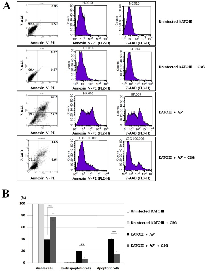 Effects of cyanidin 3-O-glucoside treatment on apoptosis in H. pylori -infected KATO Ⅲ cells. (A), The assay of Annexin V and 7-AAD (7-Amino-Actinomycin) binding staining was performed with the same batch cells on Figure 3 . Data analysed with FACS flow cytometry (Becton-Dickinson). (B) , C3G treatment showed reduced apoptosis in H. pylori -infected KATO III cells, whereas cell viability of infected cells ( HP + / C3G-) was not recovered compared to uninfected control ( HP - / C3G- or HP - / C3G+) and C3G-treated groups ( HP + / C3G+).