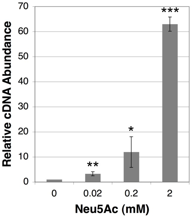 Effect of synthetic sialic acid upon nan operon transcription. F. nucleatum ssp. nucleatum was incubated in the presence of synthetic sialic acid at concentrations ranging from 0.02 mM to 2 mM before extracting RNA and measuring nan operon expression. Data are expressed relative to the cDNA abundance measured in the sample receiving no exogenous sialic acid. This sample was arbitrarily assigned a value of 1. All data were normalized using the DNA gyrase gene gyrA as a housekeeping control. Presented data are the average results from 3 independent experiments. Statistical significance was evaluated using an unpaired Student's t -test. *p