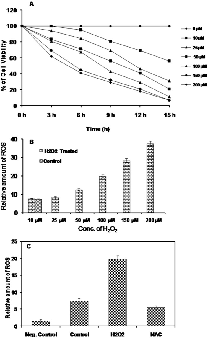 Effect of H 2 O 2 on growth inhibition of L. donovani parasites. (A) L. donovani promastigotes (1×10 6 cells/ml) culture was treated with increasing concentration of H 2 O 2 (0–200 µM) up to 15 hrs and growth inhibitory effect of H 2 O 2 determined by MTT assay at 3 hr intervals. The cell viability after exposure with increasing concentration of H 2 O 2 was determined to optimize time of exposure and dose. (B) The intracellular ROS level was determined by quantification of DCF fluorescence. Results were normalized with cell numbers and presented relative to untreated control cells. (C) To confirm intracellular ROS production a quenching study was performed. The parasites treated with H 2 O 2 in the presence of 20 µM N -acetyl-L-cysteine (NAC) ROS scavenger reversed the effect of H 2 O 2. The experiments were repeated three times and graphs represent the mean ± SD.