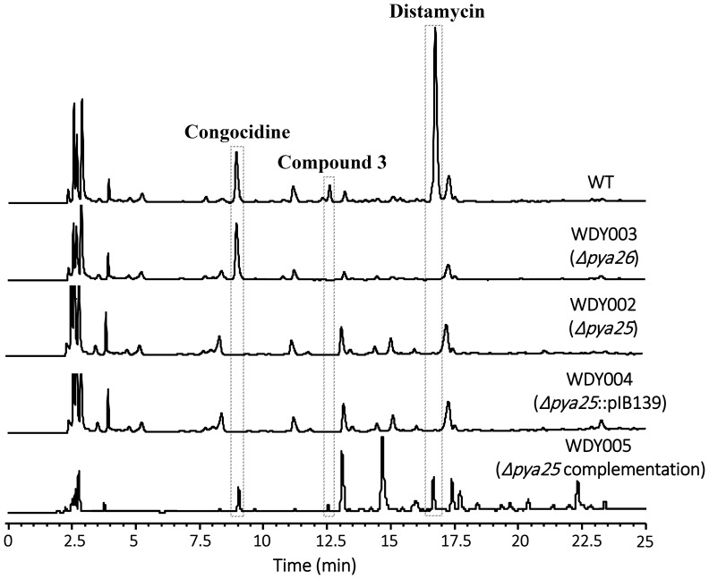 In-frame deletion of pya25 and pya26 in S. netropsis . <t>HPLC</t> analysis of <t>pyrrolamides</t> production in S. netropsis wild-type strain, the mutant strains WDY002 (Δ pya25 ) and WDY003 (Δ pya26 ), and the complementation strains WDY004 (negative control) and WDY005. Congocidine, Compound 3 , and Distamycin are indicated. The characteristic absorbance wave-length for pyrrolamides is 297 nm.