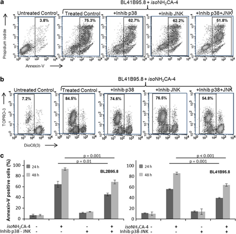 p38 and JNK MAP kinase inhibition decreases apoptosis induced by iso NH 2 CA-4 in EBV-infected BL41B95.8 cells. Cells were treated with 10 nM iso NH 2 CA-4 with or without 1 h pretreatment with the p38 inhibitor SB203580 (25 μM), the JNK inhibitor SP600125 (7.5 nM) or both. ( a and b ) An example of apoptosis induction and mitochondrial loss of integrity in BL41B95.8 cells as assessed on flow cytometry biparametric histogram after annexin-V and propidium iodide ( a ) or DiOC6(3) and propidium iodide ( b ) labeling. Percentages of apoptotic cells are indicated in each graph. ( c ) Percentages of BL2B95.8 (left panel) and BL41.B95.8 (right panel) annexin-V-positive cells in presence (+) or absence (−) of iso NH 2 CA-4 and/or both p38 and JNK inhibitors at 24 and 48 h. Results are representative of three independent experiments