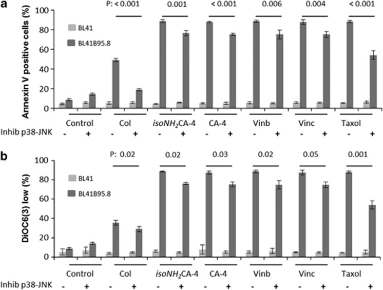 p38 and JNK inhibitors counteract apoptosis induced by any class of spindle poisons in EBV-positive BL41B95.8 cells. BL41 and BL41B95.8 cells were treated with actin-stabilizing (Taxol) or with actin-destabilizing drugs specific for the colchicine site (colchicine: 30 nM Col; 10 nM ( iso NH 2 CA-4, isoCA-4); 20 nM CA-4) or the vinca site (vinblastine: 25 nM Vinb; vincristine: 25 nM Vinc) for 24 h. Cells were additionally pretreated (+) or not (−) for 1 h with the p38 inhibitor SB203580 (25 μ M) and the JNK inhibitor SP600125 (7.5 nM). ( a ) Percentages of BL41 and BL41B95.8 annexin-V-positive cells assessed by flow cytometry. ( b ) Percentages of DiOC6(3) negative cells, assessed by flow cytometry. These results correspond to at least three independent experiments