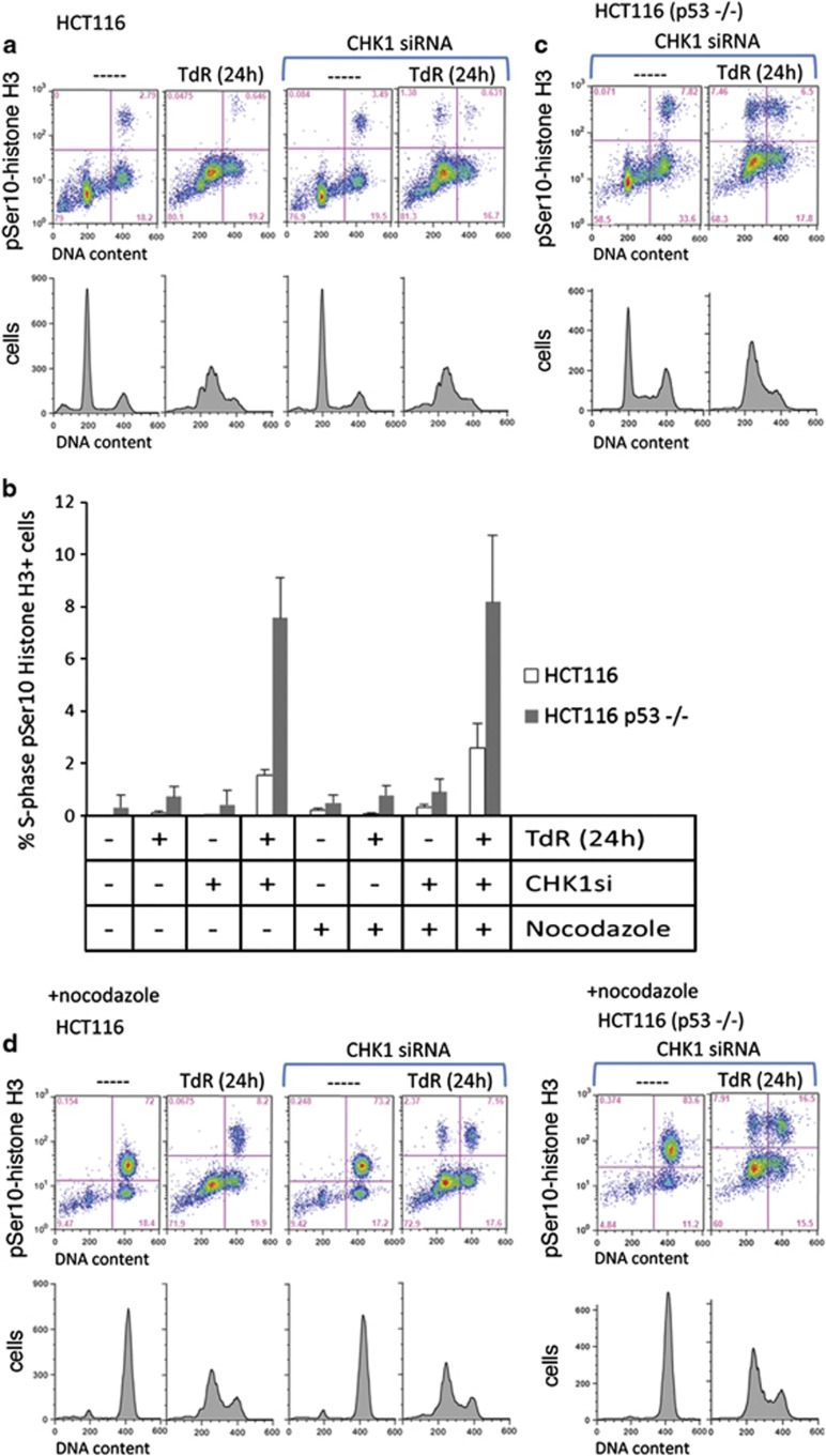 Induction of Ser10-histone H3 phosphorylation in S-phase CHK1-depleted HCT116 cells during DNA replication stress. ( a ) HCT116 cells pretreated with control or CHK1 siRNAs were exposed or not exposed to 2 mM thymidine (TdR) for 24 h before collection and analysis for pSer10 histone H3 (top panels, scatter plots) and DNA (bottom panels) content by flow cytometry. Cells with elevated pSer10-histone H3 are in the top quadrants of the scatter plots. S-phase cells showing phosphorylated histone H3 are in the top left quadrant those in G2/M are in the top right. Percentages of cells in each of the gated populations are indicated. ( b ) Mean values (± S.D.) for three independent experiments as presented above. The effects of nocodazole are also presented. ( c ) p53−/− HCT116 cells were treated with the CHK1 siRNA in the presence or absence of 2 mM thymidne for 24 h before collection and analysis of pSer10 Histone H3 and DNA content by flow cytometry. ( d ) Effects of nocodazole treatment on HCT116 or HCT116 p53−/− cells treated as in a , c