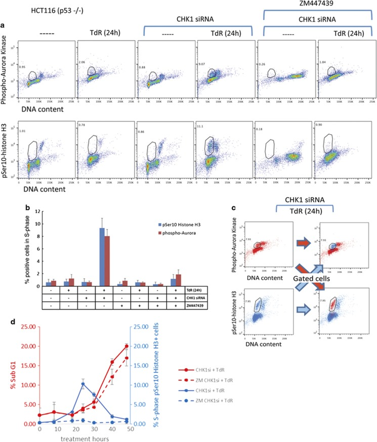 Aurora kinase autophosphorylation is required for Ser10-histone H3 phosphorylation in S-phase CHK1-depleted p53−/−HCT116 cells but is not required for cell death. ( a ) Control or CHK1-depleted HCT116 p53−/− cells were exposed or not exposed to 2 mM thymidine (TdR) for 24 h before collection and analysis of pSer10-histone H3, phospho-Aurora kinase and DNA content by flow cytometry. Cells showing elevated levels of the indicated phospho-proteins are gated and the % of cells presenting elevated levels is indicated. Effects of the Aurora B inhibitor (ZM447439, 2 μ M, 24 h) treatment are also presented. It is important to note that Aurora B inhibition has been reported to induce polyploidy; 34 however, when the cells are treated with ZM447439 and thymidine, they fail to traverse mitosis. ( b ) Mean values (± S.D.) for three independent experiments as presented above. ( c ) CHK1-depleted HCT116 p53−/− cells exposed to thymidine for 24 h were fixed and stained for pSer10-histone H3 and phospho-Aurora kinase content using mouse anti-pSer10-histone H3 and rabbit anti-phospho Aurora kinase. Alexa Fluor 647—R-Phycoerythrin goat anti-mouse IgG and FITC goat anti-rabbit IgG were then used to visualize the proteins by flow cytometry. Cells gated for phospho-Aurora kinase were then analysed for pSer10-histone H3. Similarly, cells gated for pSer10-histone H3 were subsequently analysed for phospho-Aurora kinase. Analyses show that gated cell populations co-stain for both proteins. ( d ) CHK1-depleted HCT116 p53−/− cells exposed to 2 mM thymidine for the indicated times in the presence or absence of 2 μ M ZM447439 were collected and analysed for DNA and pSer10-histone H3 content by flow cytometry. The percentages of cells with a subG1 DNA content or showing histone H3 phosphorylation presented are mean values from three independent experiments ±S.D.