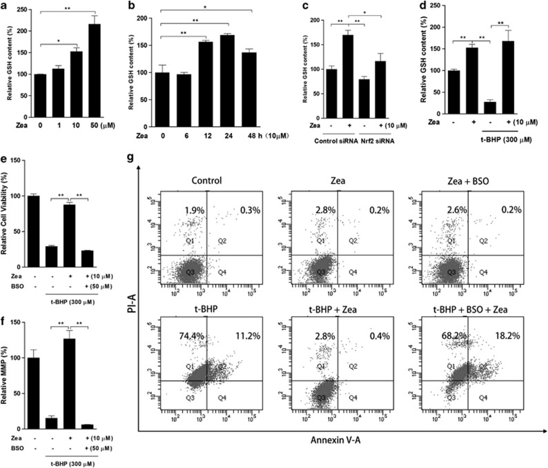 GSH is the critical effector of the protective effects of Zea. Total GSH levels were measured following the Zea treatment of ARPE-19 cells: ( a ) dose response—cells were treated with 1, 10, or 50 μ M Zea for 24 h; ( b ) time response—cells were treated with 10 μ M Zea for 6, 12, 24 or 48 h; ( c ) Nrf2 knockdown response—cells were transfected with Nrf2 siRNA for 24 h, followed by treatment with 10 μ M Zea for an additional 24 h; ( d ) t -BHP response—cells were treated with 10 μ M Zea for 24 h, followed by challenge with 300 μ M t -BHP for an additional 6 h. In the presence of 50 μ M BSO, cells were treated with 10 μ M Zea for 24 h and then challenged with 300 μ M t -BHP for an additional 6 h, after which cell viability ( e ), the mitochondrial membrane potential ( f ), and apoptosis activation ( g ) were analyzed. All data are shown as mean±S.E.M. The symbol '*' indicates statistical significance, as determined by one-way ANOVA (* P