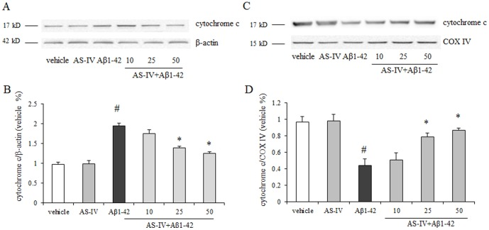 AS-IV inhibited Aβ1-42-induced <t>cytochrome</t> c release from mitochondria in SK-N-SH cells. A. A representative blots of immunoreactive bands for cytochrome c in cytosol. B. Data were expressed as fold-increase of cytochrome c relative to vehicle. Protein expression levels were normalized to β-actin. C. A representative blots of immunoreactive bands for cytochrome c in mitochondria. D. Data were expressed as fold-increase of cytochrome c relative to vehicle. Protein expression levels were normalized to COX IV. # P