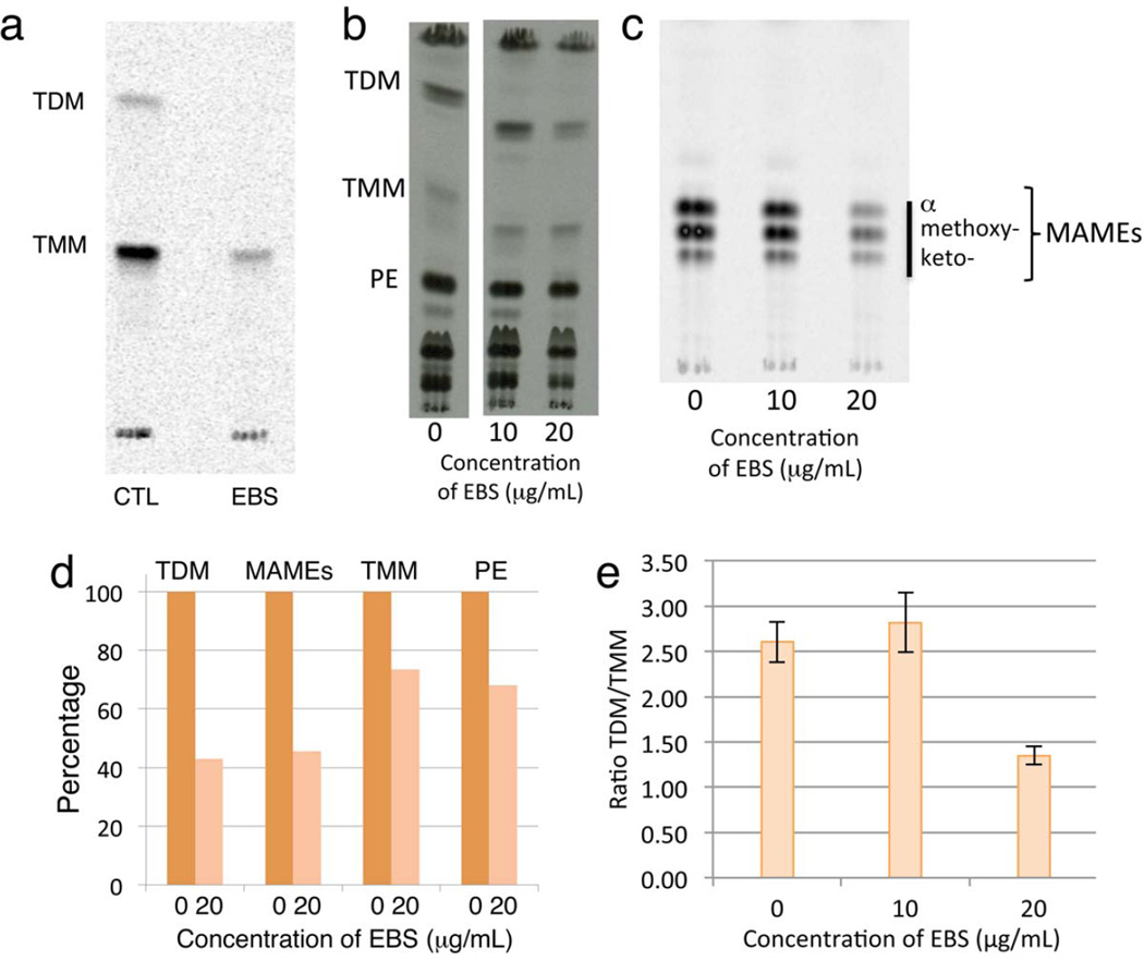 Ebselen inhibits mycolyltransfer in vitro and in Mycobacterium tuberculosis (a) The radiometric mycolyltransferase assay was used to measure the activity of the Ag85C protein in the presence of TMM, [U- 14 C] trehalose and 0 (CTL: control) or 10 µM EBS. TDM synthesis is completely abolished and the formation of TMM is reduced 70.7 % as compared to the control. ( b ) Effect of EBS treatment for 16 h at 0.5 and 1x MIC (10 and 20 µg/mL, respectively) on [ 14 C]-acetate incorporation into TMM, TDM and PE. Total lipids were extracted from bacterial cells as described 36 . The same volume of each sample was loaded per lane. The TLC was developed in the solvent system (chloroform:methanol:water; 20:4:0.5, v/v) and revealed by autoradiography. PE represents phosphatidylethanolamine. ( c ) Effect of EBS treatment for 16 h at 0.5 and 1 times the determined MIC value (10 and 20 µg/mL, respectively) on [ 14 C]-acetate incorporation into cell wall-bound mycolic acids. Cell wall-bound mycolic acid methyl esters (MAMEs) were prepared from delipidated cells 36 . The same volume of samples was loaded per lane. The TLC was developed three times in the solvent system (nhexanes: ethyl acetate; 95:5, v/v) and revealed by autoradiography. ( d ) Effect of EBS treatment for 16 h at 1x MIC (20 µg/mL) on [ 14 C]-acetate incorporation into TMM, TDM, PE and cell wall-bound mycolic acids was performed in triplicate. The amount of radioactivity incorporated in the products of interest shown in Fig. 2b and c was semiquantified using a Phosphorimager and results are expressed as the percentage of the value measured in the untreated cells. PE synthesis was used here as an internal standard to differentiate the specific inhibitory effects of EBS on TDM formation and cell wallbound mycolic acid transfer from the general and non-specific decrease in [1,2- 14 C]- acetate incorporation resulting from the loss of metabolic activity in the treated cells. ( e ) The ratio of TDM/TMM in the untreated control