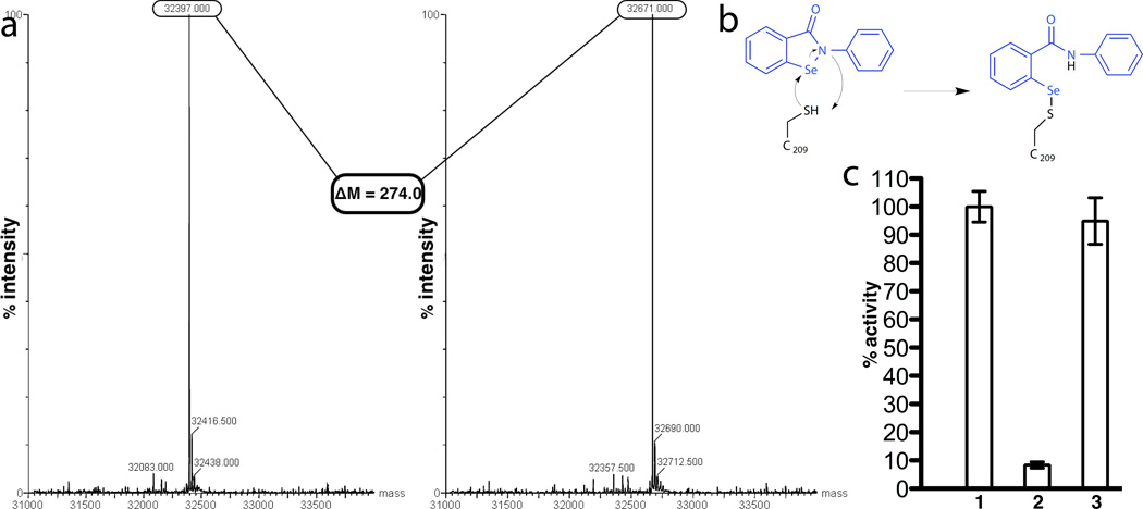 Modification of Ag85C by ebselen. ( a ) Intact mass of Ag85C with and without EBS. On the left, the deconvoluted ESI mass spectrum showing the intact mass of Ag85C. On the right, the deconvoluted ESI mass spectrum showing the intact mass of an Ag85C-EBS covalent complex. ( b ) Proposed modification of C209 by EBS. ( c ) EBS forms a reversible covalent complex with Ag85C that inhibits enzyme activity. All excess of EBS has been removed. Activity is normalized to wild type Ag85C and error bars (SD) are calculated from triplicate reactions. Bars 1 and 2 correspond to wild-type enzyme without or with EBS, respectively. Bar 3 is a sample of Ag85C-EBS covalent complex incubated with 1 mM DTT for 24 hours.