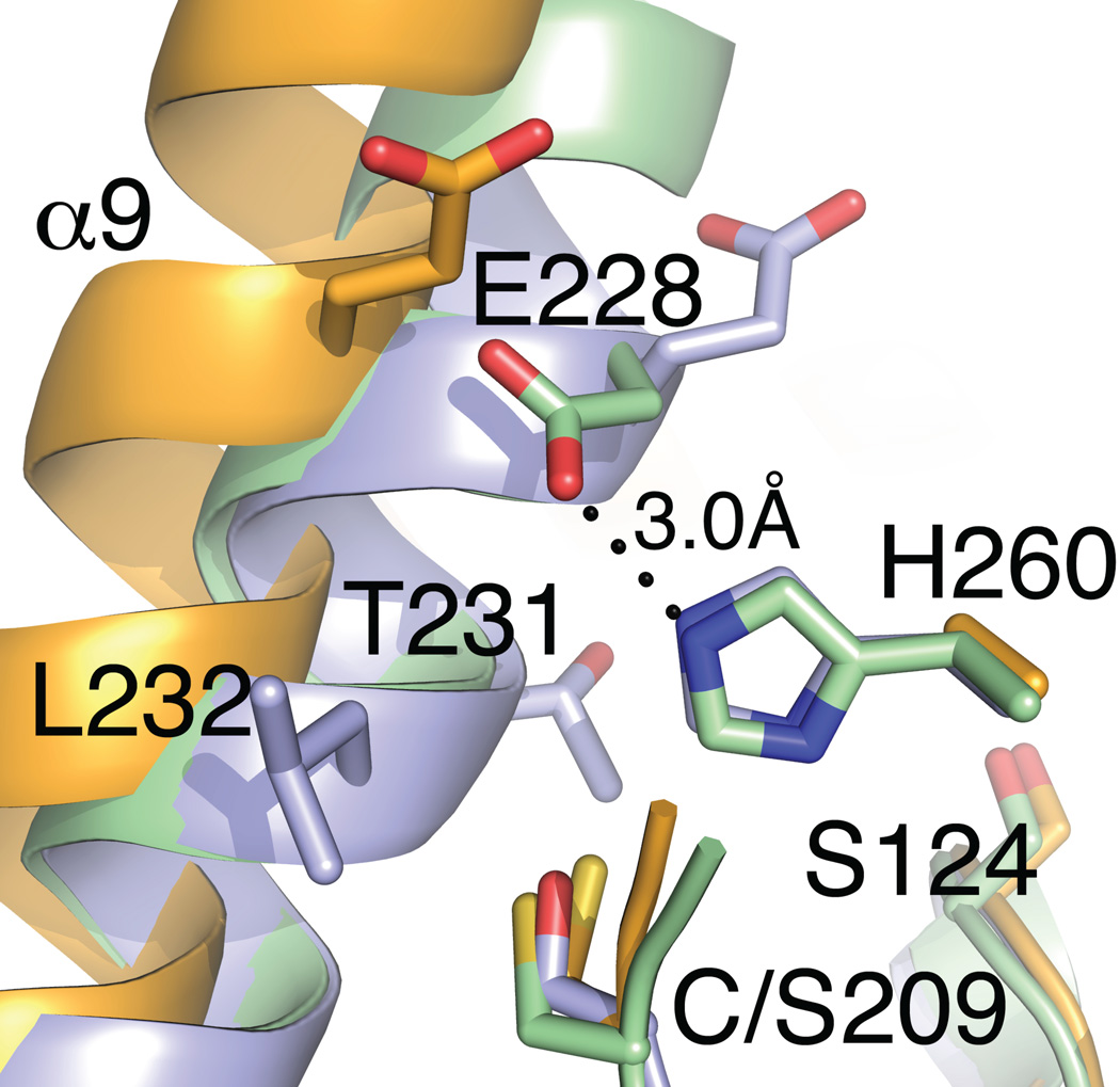 Modification at Ag85C residue 209 disrupts the active site structure. The catalytic triads for Ag85C-EBS (orange), Ag85C-C209S (blue) and Ag85C-DEP (green) are shown. Only the Ag85C-DEP structure possesses interactions between any of the catalytic triad. The dashed bond indicates the hydrogen bond between E228 and H260 in the Ag85C-DEP structure. Note that in the native form of the enzyme (not shown), H260 is also hydrogen bonded to S124. Most of the side chain of H260 in the Ag85C-EBS structure is disordered with only the β carbon of the side chain is observed.
