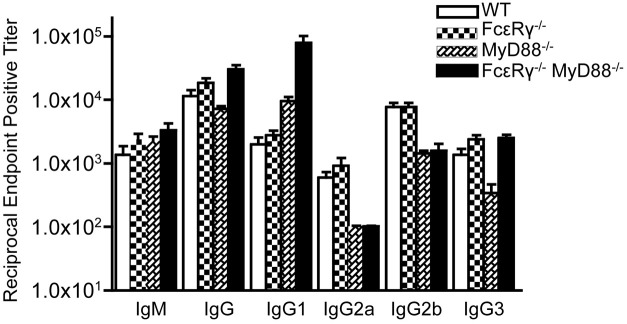 Anti- B. burgdorferi IgG subclass titers are different in the single and double knockout mice . Anti- B. burgdorferi specific titers were determined by ELISA and are reported as the reciprocal of the endpoint positive titers. The FcεR γ −/− MyD88 −/− anti- B. burgdorferi IgG1 titers are significantly higher than the MyD88 −/− titers ( P = 0.0113). The MyD88 −/− IgG 3 titers are significantly lower than the FcεR γ −/− MyD88 −/− titers ( P = 0.0025) as well as the WT and FcεR γ −/− titers ( P = 0.01 and.0025, respectively).
