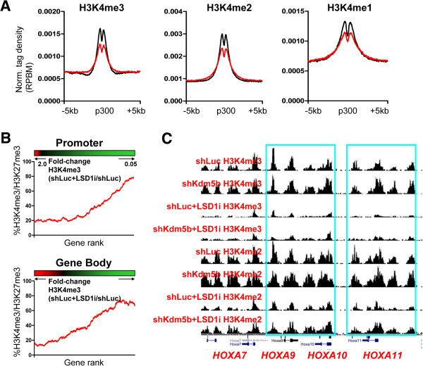 KDM5B and LSD1 regulate H3K4 methylation at promoters and enhancers in ES cells. (A) Average profile of H3K4me3/2/1 density at p300 enhancer regions in LSD1i-treated ES cells (red line) relative to shLuc ES cells (black line). RPBM, reads per base pair per million reads. (B) Relationship between changes in promoter and gene body H3K4me3 density and the percentage of genes with bivalent marks (red, increased H3K4me3; black, no-change in H3K4me3; green, decreased H3K4me3). (C) Genome browser view of H3K4me3 levels at HoxA cluster bivalent genes upon inhibition of LSD1 in ES cells.