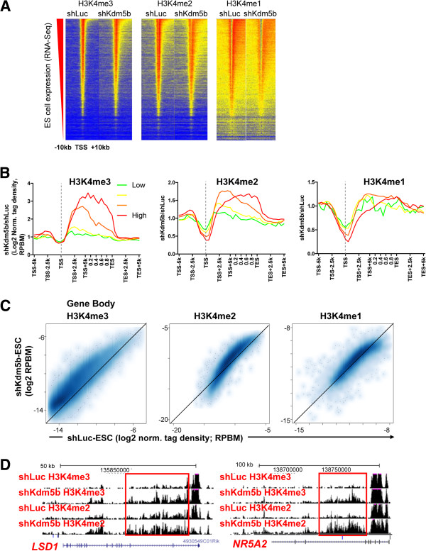 KDM5B regulates H3K4 methylation at gene body regions. Knockdown of Kdm5b transcripts results in altered H3K4 methylation profiles at promoters and enhancers and within gene body regions. (A) Heat map density of ChIP-Seq data at refseq genes sorted according to their absolute expression in ES cells. shKdm5b ES cells exhibit increased H3K4me3/2 methylation in gene body regions and decreased H3K4me3/2/1 methylation at promoter regions. (B) Correlation between changes in gene body histone methylation and expression level. Log2 fold change normalized tag density ratios (shKdm5b/shLuc) of H3K4me3, H3K4me2, and H3K4me1 at all refseq genes, which were sorted into four groups based on their absolute expression level in ES cells (red line, highest 25% expressed; green line, lowest 25% expressed). (C) Scatter plot of gene body densities of H3K4me3/2/1 in shLuc and shKdm5b ES cells. (D) UCSC genome browser examples of altered profiles of H3K4me3/2 within gene bodies of pluripotency-related genes such as Lsd1 and Nr5a2 in shKdm5b ES cells.