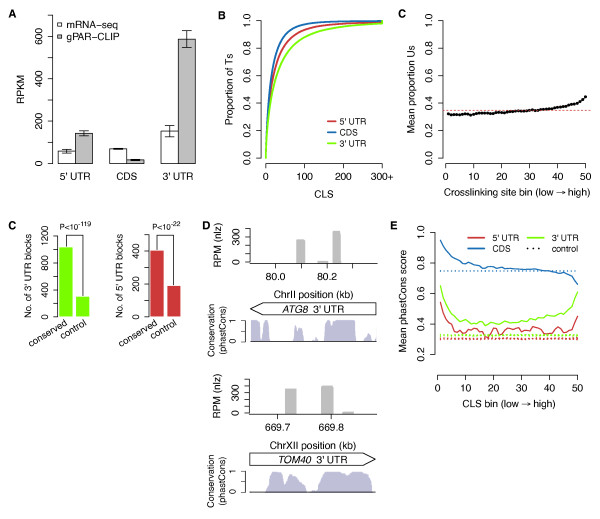 RBP crosslinking sites exhibit global sequence conservation . (a) Average ribosome depleted mRNA-seq and gPAR-CLIP read distributions across 5' UTR, CDS, and 3' UTR regions for all libraries. Error bar: 1 standard deviation. RPKM: reads per million mapped reads per kilobase. (b) Cumulative distribution of CLS values from wild-type (WT) libraries. (c) Proportion of Ts in crosslinking site binned by crosslinking site coverage (reads per million mapped reads (RPM)). The dashed red line indicates average T content of all crosslinking sites. (d) Number of conserved blocks in 3' and 5' UTRs overlapping 100% with WT gPAR-CLIP crosslinking sites (χ 2 P -values indicated). Control blocks were randomly generated within 3' and 5' UTRs to match the number and size of conserved blocks. (e) Two major gPAR-CLIP crosslinking sites in ATG8 3' UTR (top) and TOM40 3' UTR (bottom) overlapping conserved blocks. (f) Mean phastCons scores for Ts ranked and binned by CLS. Control lines represent mean phastCons scores of randomly ranked and binned Ts with no CLS, repeated ten times.
