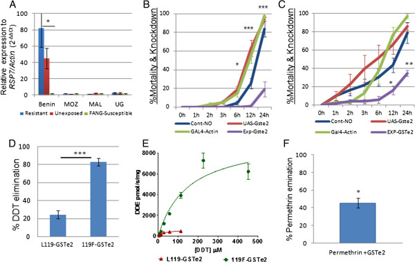 GSTe2 expression and functional analysis. (A) Comparative qRT-PCR examining DDT-resistant (Benin) and DDT-susceptible (Mozambique, Malawi and Uganda) mosquitoes. (B) DDT bioassay tests on transgenic Act5C-GSTe2 flies (Exp-GSTe2) and control strains (two parental (UAS-GSTe2 and GAL4-actin) and F 1 progeny that do not express the GSTe2 transgene (Cont-NO)). (C) The same bioassays with permethrin. (D) DDT metabolic activity (depletion rate after 1 hr) of GSTe2 alleles (mean ± standard deviation). (E) Michaelis–Menten enzyme kinetics for resistant and susceptible GSTe2 alleles (F) Permethrin metabolic activity (depletion rate after 1 hr) for the 119 F GSTe2 allele (mean ± standard deviation). DDT, dichlorodiphenyltrichloroethane; MAL, Malawi; MOZ, Mozambique; qRT-PCR, quantitative reverse transcriptase polymerase chain reaction; UG, Uganda, DDE, dichlorodiphenyldichloroethylene.