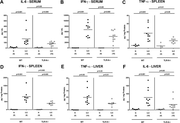 Systemic and extra-intestinal pro-inflammatory cytokine responses following ileitis induction. Serum (A) IL-6 and (B) IFN-γ, splenic (C) TNF-α and (D) IFN-γ as well as hepatic (E) TNF-α and (F) IL-6 protein concentrations were determined in respective ex vivo biopsies derived from C57BL/6 wildtype (WT; black circles) and TLR-9 deficient (TLR-9-/-; white circles) mice seven days following ileitis induction (ILE). Naïve mice served as negative controls (N). Numbers of analyzed mice (in parentheses), means (black bars) and levels of significance ( P -values) as compared to the respective groups (determined by Mann–Whitney- U test) are indicated. Data shown were pooled from three independent experiments.