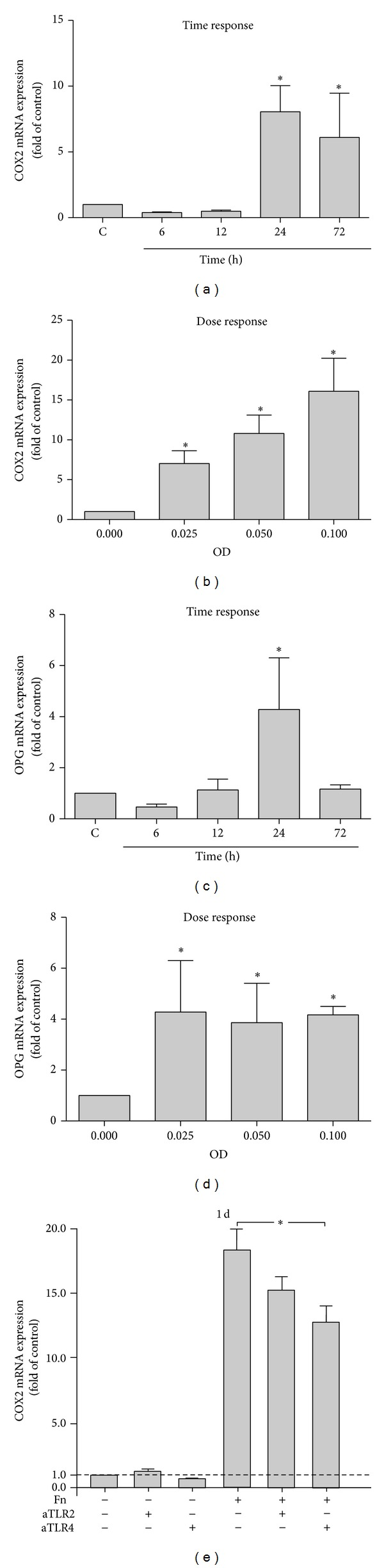 (a) COX2 expression in PDL cells stimulated by F. nucleatum ATCC 25586 over time. (b) COX2 expression in PDL cells stimulated by various concentrations of F. nucleatum ATCC 25586 at 1 day. (c) OPG expression in PDL cells stimulated by F. nucleatum ATCC 25586 over time. (d) OPG expression in PDL cells stimulated by various concentrations of F. nucleatum ATCC 25586 at 1 day. (e) COX2 expression in PDL cells stimulated by F. nucleatum ATCC 25586 (OD 0.025) in the presence or in the absence of anti-TLR2 or anti-TLR4 antibodies at 1 day. *Significant difference between groups ( P