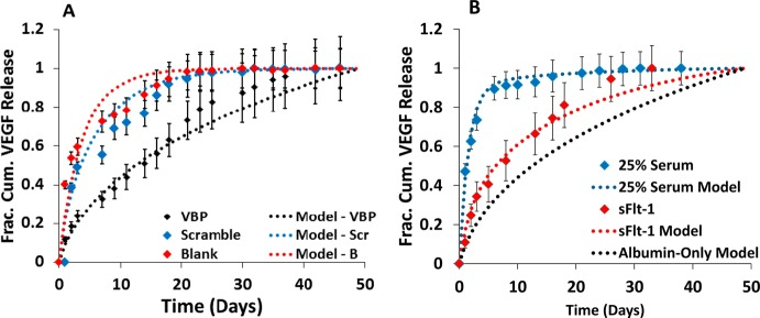 Modeling correlations to experimental release from microspheres. (A) Replot of VEGF released from Blank (red diamonds), 1.6% Scramble (blue diamonds), and 1.6% VBP (black diamonds) microspheres preincubated in 0.1 wt % BSA in PBS supplemented with 9.9 ng mL –1 VEGF, 0.1 ng mL –1 [ 125 I]VEGF. Subsequent release was measured in 0.1 wt % BSA in PBS without VEGF supplementation. Data is fit to model of normalized VEGF flux from Blank microspheres exhibiting passive diffusion of VEGF from Blank microspheres (red dotted line; R 2 = 0.916), Scramble microspheres (blue dotted line; R 2 = 0.954) and from VBP microspheres (black dotted line; R 2 = 0.952). (B) Plot of normalized VEGF release from 1.6% VBP microspheres in albumin-only solution supplemented with 10 ng mL –1 sFlt-1 (red diamonds). VEGF release data in sFlt-1 is fit to model of normalized VEGF flux from 1.6% VBP microspheres releasing into solution containing no protein, sFlt-1 (red dotted line; R 2 = 0.98). Graph also contains a replot of normalized VEGF release data from 1.6% VBP microspheres in 25 vol % serum (blue diamonds) and modeling results for VEGF release into albumin-only solution (black dotted line). Experimental VEGF release data in 25 vol % serum is fit to model of normalized flux from 1.6% VBP microspheres releasing into solution containing physiologic concentrations of three serum proteins, sFlt-1, sKDR, and α2 M (blue dotted line; R 2 = 0.99).