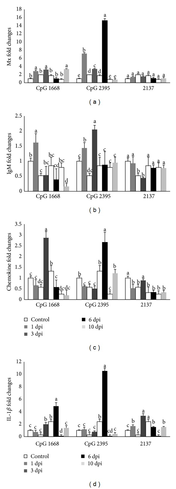 """The relative mRNA expressions of Mx (a); IgM (b); CC (c); and interleukin 1- β (d) in cobia intestine after stimulating with different <t>CpG</t> <t>ODNs</t> (1668, 2395) and ODN 2137 as control measured by quantitative real-tie PCR at 1, 3, 6, and 10 days after stimulation. The expression values are represented as """"fold change"""" and compared to the noninjected control samples and β -actin was used as a reference gene. The results are presented as the mean ± SD ( n = 2) and mean values with different letters are significantly different ( P ≤ 0.05)."""