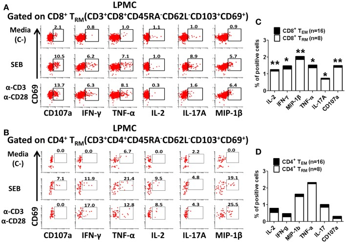 Activation of CD8 + and CD4 + tissue-resident memory T (T RM ) cells in gastric LPMC . Representative plot of the activation of gastric LPMC CD8 + (A) or CD4 + (B) T RM (CD62L − CD45RA − CD69 + CD103 + ) by two stimulants: (1) staphylococcal enterotoxin B (SEB; 10 μg/ml) and (2) anti-CD3/CD28 beads (α-CD3 α-CD28) to produce IL-2, IFN-γ, MIP-1β, TNF-α, IL-17A, and up-regulation of the expression of CD107a. Cells left unstimulated were used as negative control (Media, C-). Cumulative data comparing baseline activation levels of gastric LPMC CD8 + (C) and CD4 + (D) T RM (white portion of the bar) to PBMC (black portion of the bar). In (C,D) significant differences between T EM and T RM are indicated with asterisks on top of each bar; * p