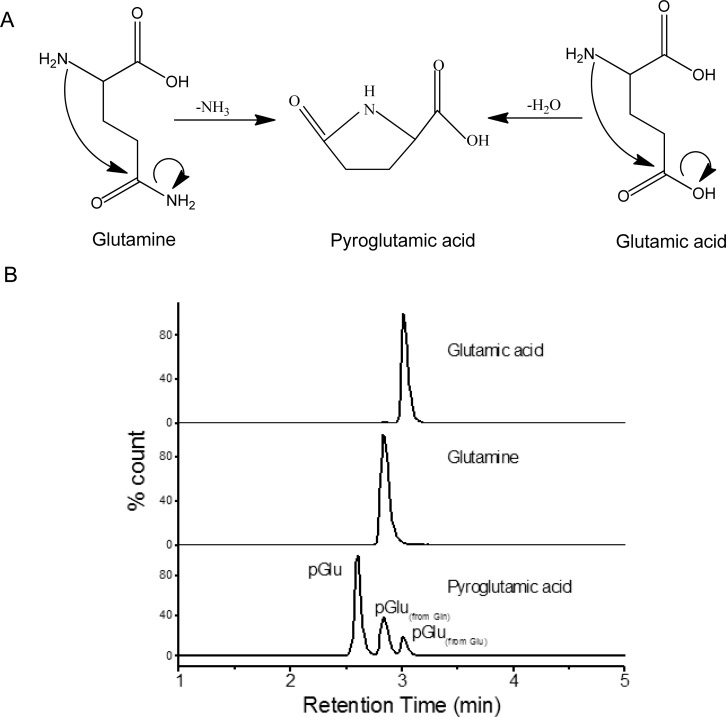 """(A) Mechanism of Gln and Glu cyclization to pGlu after ammonia and water loss, respectively. (B) MRMs of Glu, Gln, and pGlu from an equimolar mix of Glu, Gln, and pGlu standards (1 mM) showing the """"in-source"""" formation of pGlu from Gln and Glu. The MS spectra were acquired using the optimal conditions for each analyte as described in the Experimental Section ."""