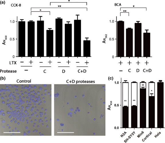 Cytotoxicity of the botulinum C and D proteases. (a) Cell counting assay (CCK-8) was used to monitor neuroblastoma N2A cell viability 40 h after application of the proteases in the presence or absence of Lipofectamine LTX. Botulinum protease type C significantly impaired viability compared with a control condition (* p
