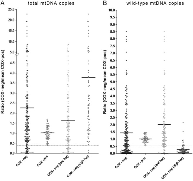 Total and wild-type mtDNA copies in individual paraspinal muscle fibres. ( A ) Ratio of total mitochondrial DNA (mtDNA) copies in respiratory-deficient paraspinal muscle fibres [wild-type and deleted based on MTND1 values in real-time polymerase chain reaction (PCR)], corrected for case to case variability by using the mean copy number of 10 fibres with intact mitochondrial respiratory chain complex IV or cytochrome c oxidase (COX) activity (COX-positive) in each case, indicated a significantly greater total mtDNA copy number compared with COX-positive fibres ( A ). When the lower limit of 95% confidence interval of total copy number ratios in COX-positive fibres were used to identify fibres with mtDNA depletion ( A , below the dotted line), we detected a number of respiratory-deficient fibres (13.5% of all respiratory-deficient fibres) where total mtDNA copies were depleted in the absence of high level of mtDNA deletion. ( B ) Ratio of wild-type mtDNA copies in respiratory-deficient paraspinal muscle fibres (based on MTND4 values in real-time PCR), corrected for variability in wild-type mtDNA copies within fibres with intact COX activity (COX-positive), indicated a significantly decrease in wild-type mtDNA copies in respiratory-deficient fibres with high heteroplasmy levels compared with COX-positive fibres ( B ). The increase in total mtDNA copies and decrease in wild-type mtDNA copies in respiratory-deficient fibres were consistent with pathogenecity of high levels of mtDNA deletion, previously reported [ 12 , 19 ]. When the lower limit of 95% confidence interval of wild type copy number ratios in COX-positive fibres were used to identify fibres with mtDNA depletion ( B , below the dotted line), a number of respiratory-deficient fibres (11.4% of all respiratory-deficient fibres) with depletion of wild type mtDNA copies and without high level of mtDNA deletion was detected.