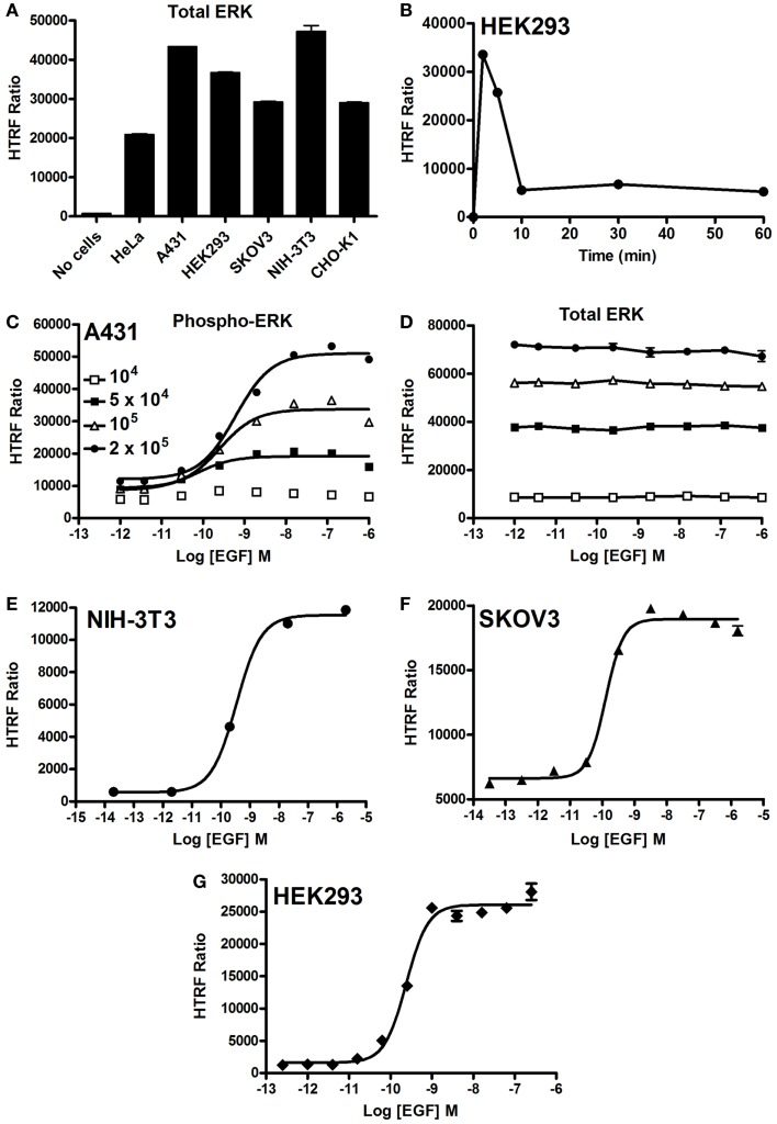 EGF-promoted Phospho-ERK1/2 activation detected by the Phospho-ERK assay . (A) Total ERK levels quantified in various cell lines. (B) Kinetics of EGF-induced ERK1/2 activation in HEK293 cells endogenously expressing EGFR upon their stimulation with 100 nM of EGF. (C,D) The effect of cell density on the phosphorylation of ERK1/2 (C) versus total ERK1/2 (D) upon stimulation with increasing concentrations of EGF as indicated. EGF-induced Phospho-ERK1/2 in various cell lines endogenously expressing EGFR: NIH-3T3 (E) , SKOV3 (F) , and HEK293 (G) cells (10 5 cells/well) stimulated for 5 min with increasing concentrations of EGF before HTRF measurements were performed using the one-plate protocol. The data are mean ± SEM of three independent experiments performed in duplicate.