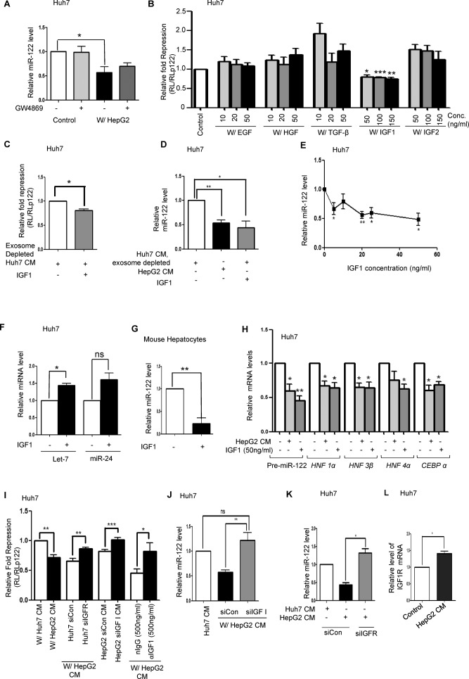 IGF1 secreted by HepG2 reduces activity and expression of miR-122 in Huh7 cells. ( A ) Effect of GW4869 on transfer of anti-miR-122 signal from HepG2 to Huh7 cells. HepG2 cells and Huh7 cells were either co-cultured together or mixed after being cultured separately for 48 h in presence and in absence of GW4869. Real-time quantification of miR-122 was then done to detect the level of miR-122 in both control and co-cultured samples in presence or absence of GW4869. Data represents three independent experiments with qPCR for each experiment being conducted in triplicate. P values were calculated by paired t test. ( B ) Effect of different growth factors on miR-122 activity in Huh7 cells. Huh7 cells transfected with RL reporters were incubated for indicated concentrations (ng/ml) of Epidermal Growth Factor (EGF), Hepatocyte Growth Factor (HGF), Transforming Growth Factor β (TGF-β), Insulin-like Growth Facto1 (IGF1) and Insulin-like Growth Factor 2 (IGF2) overnight in DMEM and luciferase activities were measured. Fold repression was estimated by dividing the normalized RL levels in RL-con and RL-per-miR-122 expressing cells. Relative fold repression was determined by setting the repression level of control as 1. ( C, D ) Effect of IGF1 on miR-122 activity (C) and Level (D) in Huh7 cells. Cells were incubated with exosome depleted Huh7 CM alone or supplemented with 100 ng/ml IGFI for 72 h with fresh changes after every 36 h. HepG2 CM was used as a positive control. ( E ) Dose response curve to determine the effect of various concentrations of recombinant IGF1 (ng/ml) on the miR-122 level of Huh7 cells. Huh7 cells were incubated for 24 h with DMEM containing IGF1 (0–50 ng/ml). Total RNA was extracted from the cells and qPCR was done to determine the miR-122 level. We found that the decrease in miR-122 level starts from 5 ng/ml of IGF1. For panel C experiments were performed in triplicate and P value was calculated by using unpaired t test. For panels D and E data represents four independent experiments with qPCR for each experiment being conducted in triplicate. P values were calculated by paired t test. ( F ) miR-24 and let-7a level change detected by real-time quantification in Huh7 cells treated with IGF1. Data represents three independent experiments with qPCR for each experiment being conducted in triplicate. P values were calculated by paired t test. ( G ) Effect of IGF1 on miR-122 level in primary mouse hepatocytes treated with IGF1. Data represents four independent experiments with qPCR for each experiment being conducted in triplicate. P values were calculated by paired t test. ( H ) Quantification of pre-miR-122, and other hepatic nuclear factor expression in Huh7 cells incubated for 72 h either with HepG2 CM or exosome depleted Huh7 CM containing 0 and 50 ng/ml of IGF1. Data represents four independent experiments with qPCR for each experiment being conducted in triplicate. P values were calculated by paired t test. ( I ) Effect of IGF1 depletion in HepG2 or IGF1R depletion in Huh7 on miR-122 activity in Huh7 cells in presence of HepG2 CM. Huh7 cells (control or IGF1R depleted), expressing miR-122 RL reporter, were incubated with CM from normal or IGF1 depleted HepG2 for 72 h to determine the specificity of IGF1 to decrease miR-122 activity in Huh7 cells. For control experiments, non-target siRNA was used. Incubation of HepG2 CM with αIGF1 antibody removed the anti-miR-122 activity. nIgG was used as a control. Fold repression was estimated by dividing the normalized RL levels in RL-con and RL-per-miR-122 expressing cells. Relative fold repression was determined by taking the control as 1 and expressing repression values relative to 1. Experiments were performed in triplicate and P value was calculated by using paired t test. ( J ) Effect of IGF1 depletion on miR-122 level in Huh7 cells incubated with CM from HepG2 cells transfected with a non-target or IGF1 specific siRNAs. The miR-122 level of the cells was detected by RT-PCR. Data represents five independent experiments with qPCR for each experiment being conducted in triplicate. P values were calculated by paired t test. ( K ) miR-122 level in Huh7 cells depleted for IGF1R (siIGF1R transfected) against control siRNA transfected cells in presence of HepG2 CM. Cellular miR-122 levels were quantified by RT-PCR. Data represents three independent experiments with qPCR for each experiment being conducted in triplicate. P values were calculated by paired t test. ( L ) Effect of HepG2 CM on IGFR1R expression in Huh7 cells. Huh7 cells incubated for 72 h with HepG2 CM were analysed for IGF1R mRNA levels by qRT-PCR. Normalization was done by 18S rRNA. Data represents three independent experiments with qPCR for each experiment being conducted in triplicate. P values were calculated by paired t test. All data is represented as mean ±SEM from multiple independent experiments. ns: non-significant, * P