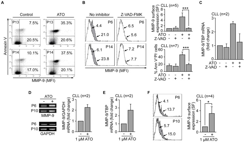 Upregulation and membrane localization of MMP-9 is an initial CLL cell response to the cytotoxic action of ATO. (A) Cell sorter biparametric diagrams of PI − CLL cells (1.5×10 5 ) treated or not with ATO for 24 h and analyzed for MMP-9 expression. Numbers indicate the percentage of cells expressing MMP-9 in the early apoptotic (Annexin V + , top) and live (Annexin V − , bottom) cell compartments. (B) Flow cytometric analysis of MMP-9 expression in control or ATO-treated CLL cells with or without previous incubation with 50 µM Z-VAD-FMK. Histograms from two representative cases are shown. White areas: control cells; grey areas: ATO-treated cells. Arrows indicate specific fluorescence (SF). Normalized average values for all five samples analyzed are shown. The average % of early apoptotic (Ann V + /PI − ) cells in these samples is also shown. (C) 10–15×10 6 CLL cells treated as in (B) were analyzed for MMP-9 mRNA expression by qPCR, using TBP as an internal control. Average normalized values (fold change) are shown. (D,E) 10–15×10 6 CLL cells were treated with 1 µM ATO for 24 h and MMP-9 mRNA expression analyzed by RT-PCR (D) and qPCR (E). Normalized average values (fold change) are shown. (F) CLL cells treated as in (D, E) were analyzed for MMP-9 surface expression by flow cytometry with an anti-MMP-9 pAb or a control pAb. Histograms for the same samples used in (D, E) are shown. Arrows, white and grey areas are as in (B). Normalized average SF values of all four samples studied are shown. *P≤0.05; ***P≤0.001.