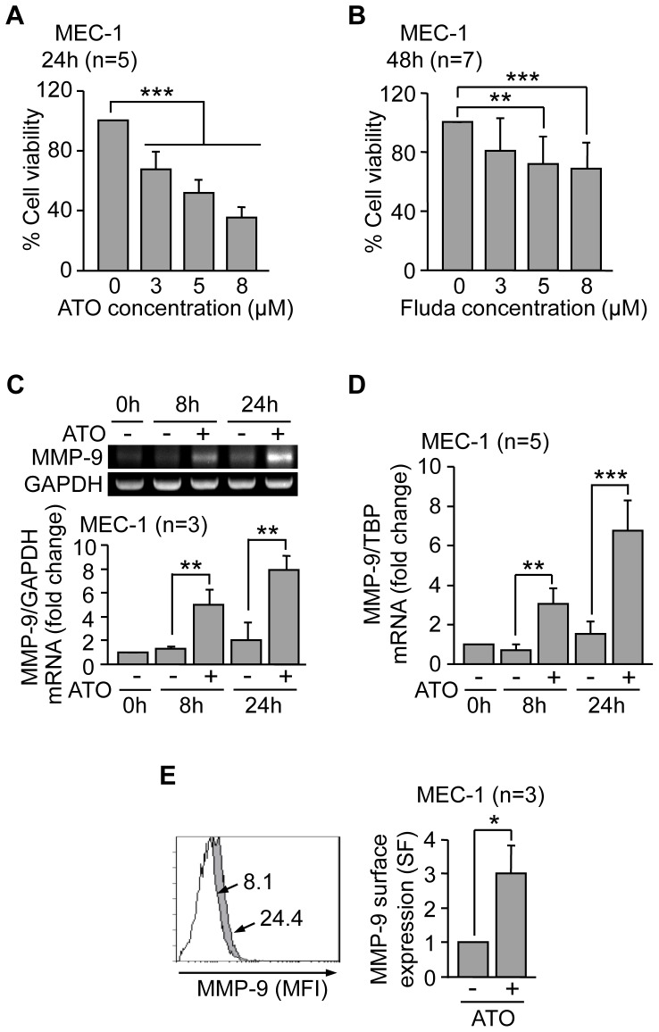 Effect of ATO and fludarabine on MEC-1 cells. (A, B) 7.5×10 4 MEC-1 cells in IMDM/0.1% FBS were treated or not with the indicated concentrations of ATO (A) or fludarabine (Fluda) (B). After 24 h (ATO) or 48 h (Fluda), cell viability was determined by the MTT assay. Control cell viability was normalized to 100 and average values are shown. (C,D) 5×10 6 MEC-1 cells were treated with 3 µM ATO for the indicated times and MMP-9 mRNA expression was analyzed by RT-PCR, using GAPDH as internal control (C) and qPCR, using TBP as internal control (D). Normalized average values (fold change) are shown. (E) 1.5×10 5 MEC-1 cells were treated or not with 3 µM ATO for 24 h and MMP-9 surface expression was analyzed by flow cytometry, using an anti-MMP-9 pAb or a control pAb. Histograms from a representative experiment and normalized average values for the three experiments performed are shown. White areas, control/untreated cells; grey areas, ATO-treated cells. Arrows indicate the specific fluorescence. *P≤0.05 ; **P≤0.01; ***P≤0.001.