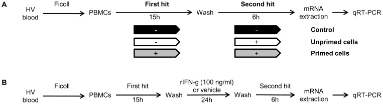Double hit model with LPS. Figure 1A . Diagram of the model of endotoxin tolerance used in our study. Peripheral blood mononuclear cells (PBMCs) were obtained from fresh whole blood from healthy volunteers (HV) by <t>Ficoll-Paque</t> density gradient centrifugation. Endotoxin tolerance was reproduced ex vivo by priming PBMCs with low-dose endotoxin (2 ng/ml) before stimulation with high dose endotoxin (100 ng/ml). S100A8 and S100A9 mRNA levels were measured by quantitative real-time polymerase chain reactions. Figure 1B . Diagram of immune-stimulating therapy model during endotoxin tolerance.