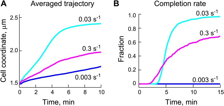 Appropriate ParB-stimulated ParA ATPase rates are important for the robustness of the DNA-relay model. ( A ) Averaged trajectories of the partition complex along the long cell axis during the fast ParA-dependent phase were simulated using varied ParB-stimulated ParA ATPase rates ( k cat ) and a fixed diffusion coefficient for the ParB/ parS complex ( D PC ) of 0.0001 μm 2 /s. ( B ) Same data set as ( A ), except that for each k cat , the fraction of trajectories that completed translocation are shown as a function of time. DOI: http://dx.doi.org/10.7554/eLife.02758.025