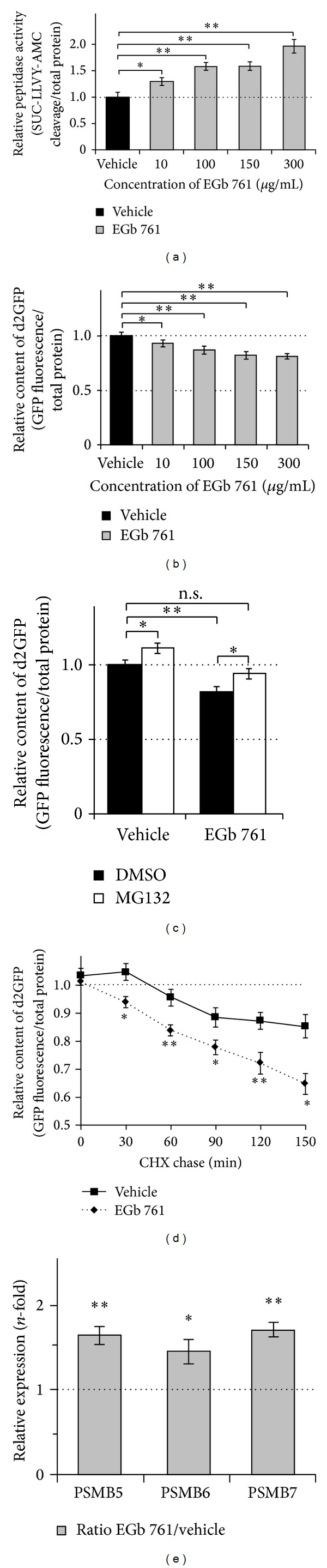 Effects of EGb 761 on basal proteasome activity. (a) HEK293 cells were treated for 24 h with indicated concentrations of EGb 761. Analysis of proteasomal peptidase (chymotrypsin-like) activity was assessed by the hydrolysis of SUC-LLVY-AMC in total cell lysates. Fluorescence of the cleaved AMC moiety was measured in the presence or absence of MG132 to achieve peptidase specificity. Values were adjusted to total protein content. Activity of vehicle-treated cells was arbitrarily set to 1; n = 4. (b–d) HEK293 cells with stable expressions of the proteasome reporter protein d2GFP (d2GFP-HEK) were treated for 24 h with indicated concentrations of EGb 761. Measurement of GFP fluorescence was used to investigate proteasomal degradation of d2GFP proteins. All achieved fluorescence intensities were finally adjusted to total protein content. (b) Cells were incubated with increasing concentrations of EGb 761 to investigate the specific, dose-depending effect on proteasome activity (a). Measurement of GFP fluorescence was used to assess the remaining d2GFP protein content as an indicator for an enhanced protein degradation by the proteasome. Values of vehicle-treated cells were arbitrarily set to 1. n = 5. (c) Previous assayed cells ((b); vehicle and 150 μ g/mL EGb 761 treatments) were additionally incubated for 2 h with the proteasome inhibitor MG132 or DMSO as control. The addition of MG132 led to an increase of fluorescence intensities in control and EGb 761-treated cells. Inhibition of proteasome activity showed the specific modulation of GFP fluorescence through proteasomal d2GFP degradation. Values of vehicle-treated cells without MG132 were arbitrarily set to 1. n = 4. (d) Cells were treated for 24 h with 150 μ g/mL EGb 761 or vehicle, followed by a chase with cycloheximide (CHX) to block synthesis of new d2GFP. Degradation kinetics of d2GFP was analyzed by measuring GFP fluorescence every 30 min. Fluorescence decay induced by CHX indicated the specificity of proteasomal