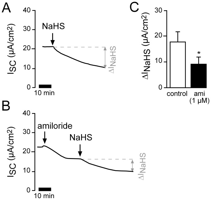 Amiloride attenuates the H 2 S induced current decrease. A ) Representative current trace of a control experiment showing the effect of apical treatment with NaHS (1 mM). B ) Lungs were treated with 1 µM amiloride apically and NaHS (1 mM) was subsequently applied for the same duration as the parallel conducted control experiment as depicted in panel A. C ) Statistical evaluation. Amiloride significantly reduced the NaHS-mediated current decrease (ΔI NaHS ; n = 6, N = 6, p≤0.05).