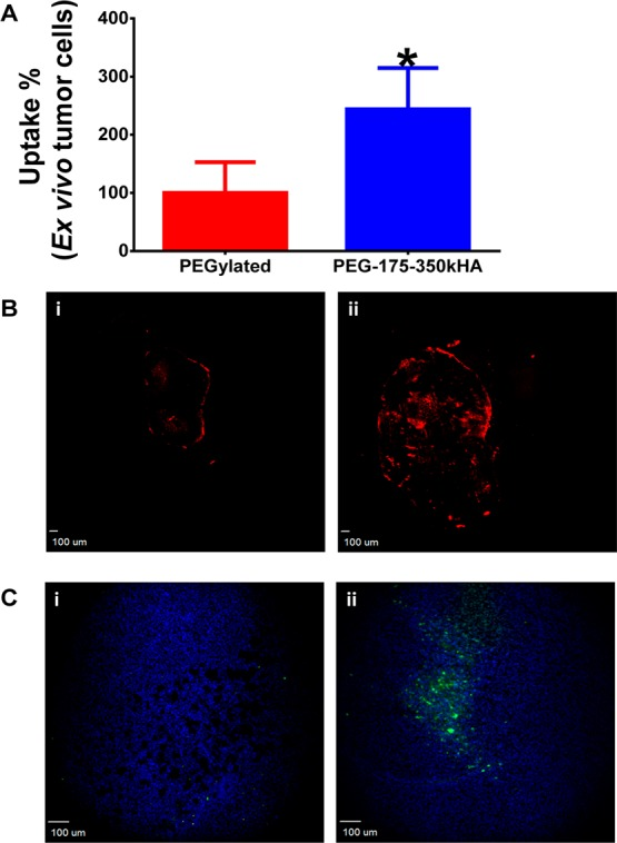 Ex vivo flow cytometry analysis of tumor cellular internalization of liposomes and cleaved caspase-3 staining after liposomal doxorubicin therapy. (A) Ex vivo tumor cellular internalization of DiD-labeled PEGylated liposomes and PEG-175–350kHA-liposomes. The tumor cells were harvested from disaggregated tumor. The internalized formulations were measured by flow cytometry, and mean fluorescence intensity was normalized to control (set as 100%). *Significant difference compared to PEGylated liposomes ( p