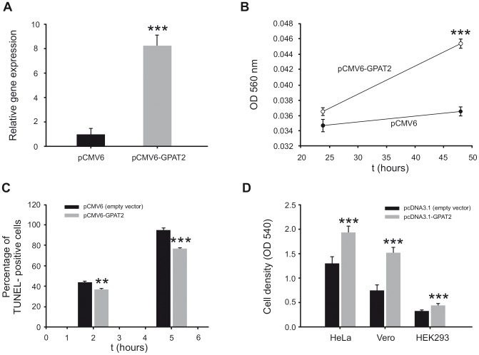 Phenotipic consequences of human and murine GPAT2 overexpression. A) Total RNA from pCMV6 and pCMV6-GPAT2 cells was extracted, subjected to cDNA synthesis and amplified by quantitative RT-PCR using primers for human GPAT2 gene, normalizing its expression level to that of TBP and β-actin housekeeping genes *** p
