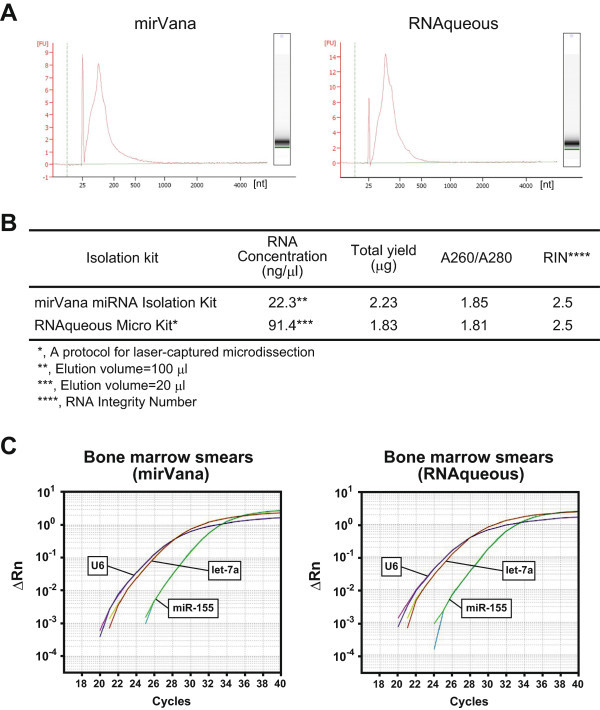 Successful isolation of small RNAs from BM smears and functional quantitative PCR analysis for the miRNAs. A , Ferrograms of the isolated RNA from BM smears. Left, mirVana miRNA Isolation Kit; and right, RNAqueous-Micro Kit. nt, nucleotide. B , Quality of the isolated small RNAs. RIN, RNA integrity number. C , Functional qRT-PCR for miRNAs (U6, let-7a, and miR-155).
