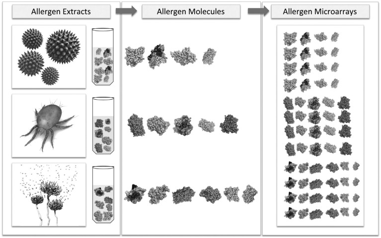 The shift from extract-based to molecule-based allergy diagnosis. For molecule-based <t>singleplex</t> approaches, the number of tests to be performed can be very high. Allergen microarrays offer the advantage of testing a large panel of molecules in one single test.