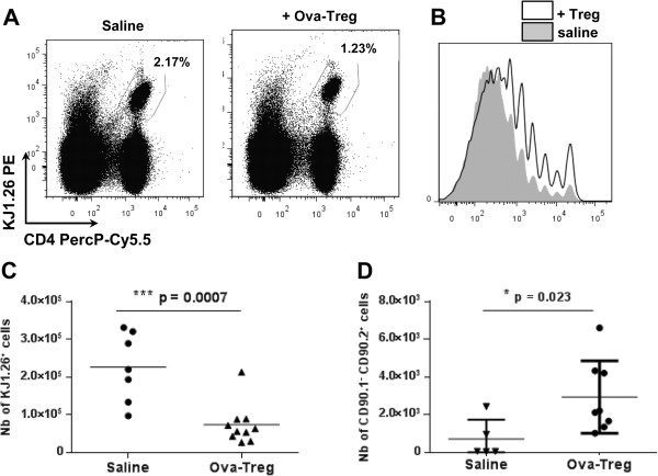 Antigen-specific type 1 regulatory T cells dampen the proliferation of effector T cells. BALB/c mice received injections of carboxyfluorescein diacetate succinimidyl ester (CFSE)–labeled, ovalbumin (ova)-specific effector CD4 + cells on the day before subcutaneous immunization with a mixture of ovalbumin and incomplete Freund's adjuvant. At day 5, either phosphate-buffered saline (PBS) ( n = 7) or 1 × 10 6 ova-specific type 1 regulatory T (ova-Treg) cells ( n = 10) were injected intravenously. The mice received ova injections into their hind paws. Two days afterward, the proliferation of CFSE + KJ1.26 + cells was analyzed by flow cytometry. (A) Representative staining results for KJ1.26 + effector T cells in the draining lymph nodes (DLNs) are graphed. (B) Representative CFSE dilution due to the proliferation of effector KJ1.26 + T cells was analyzed using FlowJo software (TreeStar, Ashland, OR, USA). Graph shows the same numbers of CD4 + KJ1.26 + cells isolated from mice that received injections of saline (gray) or ova-Treg cells (bold). (C) Graphed numbers of KJ1.26 + proliferating cells in the DLNs. (D) CD90.1 congenic BALB/c mice received injections of CFSE-labeled, ova-specific effector CD4 + cells and 1 × 10 7 ova-Treg cells ( n = 8) or PBS ( n = 5). The numbers of ova-Treg cells (CD90.2 + ) in the DLNs are shown. Differences were analyzed by Mann–Whitney U test with 95% confidence intervals.